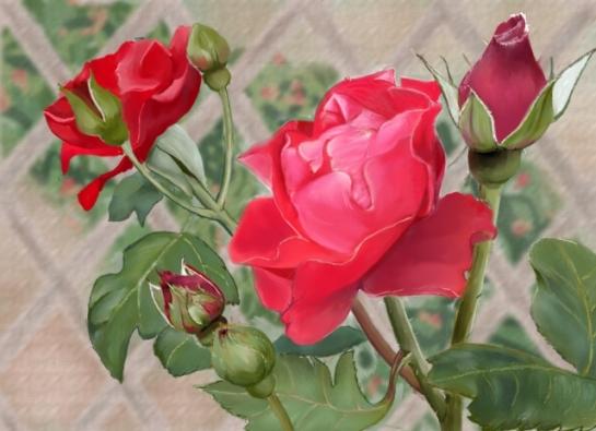 Andre's Roses Dim 640
